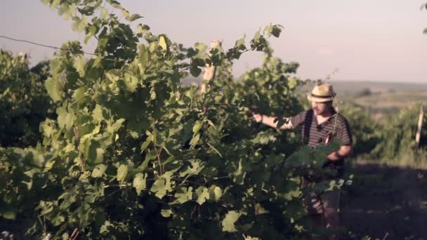 Specialist on plants, checks the grape fields. Makes notes in the book.