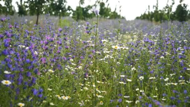 Barevné pole pozadí s divokými květy