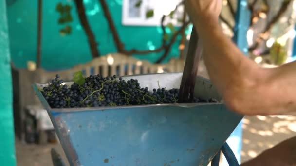 Vinař s ručním drtičem na hroznech, tradiční řemeslné víno.