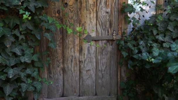 Grüne Türen. Holzstruktur. Alte Holztüren. Steadicam-Schuss