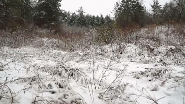 První sníh na The lesní stromy, zimní jízdy Plate.Driving boční pohled na první sníh zimy na krásné lesní cestě. Gimbal steadicam.