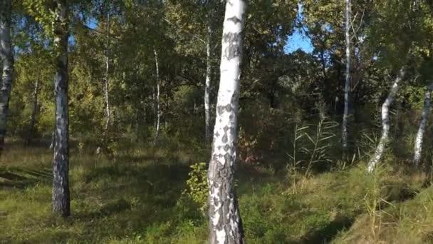 Kamery se přesune do steadicam v parku. Malebnou podzimní krajinou