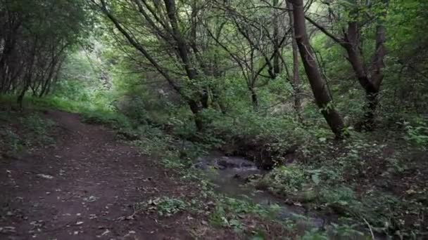 Flusso della foresta in esecuzione sopra le rocce muscose. Cascata di piccolo fiume nel bosco verde di estate