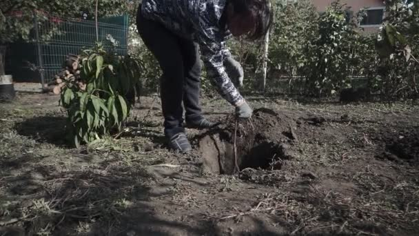 Young woman plants a tree in the garden Restoration of nature. Ecology concept.