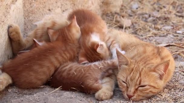 Mother cat with sleeping ginger kittens laying on a street. Cute animal family