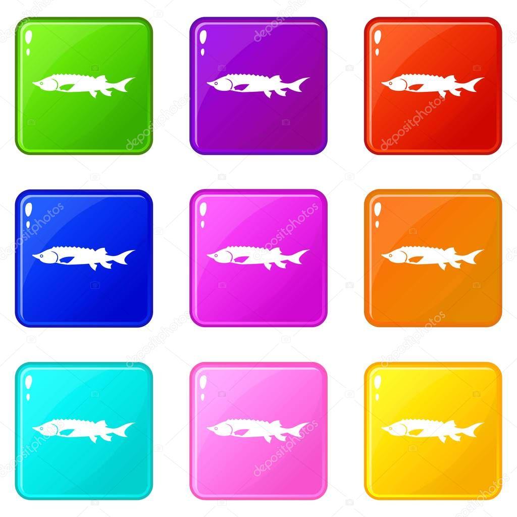Fresh sturgeon fish icons 9 set