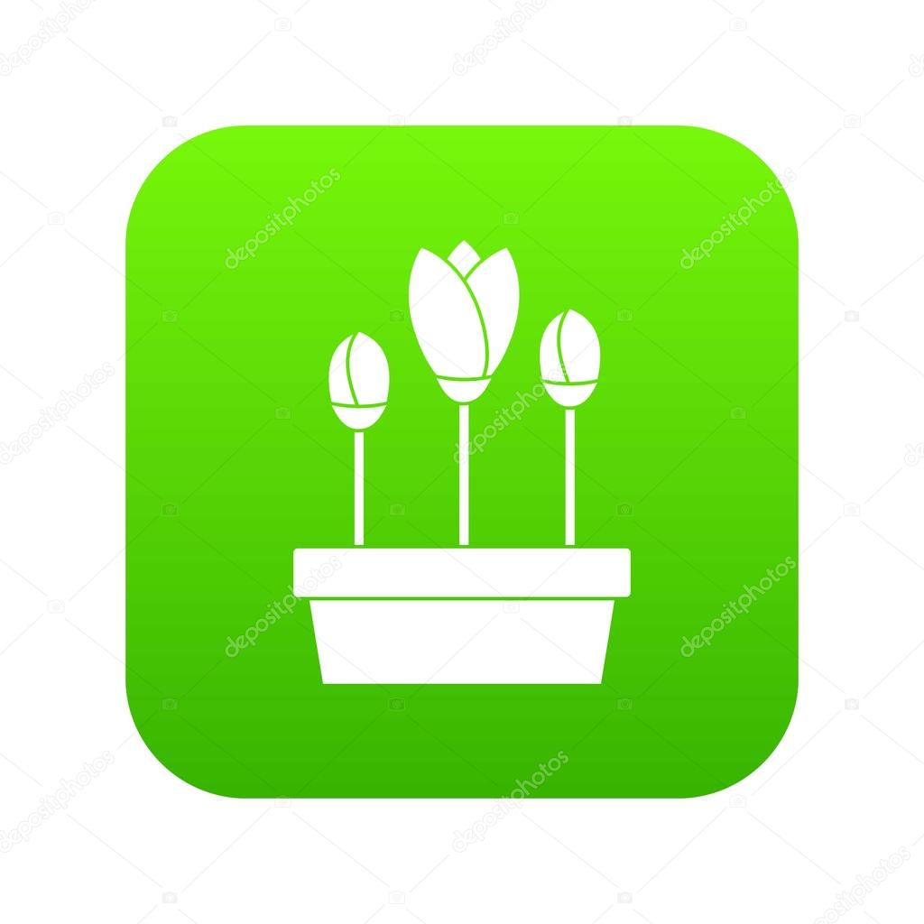 Tulips in box icon digital green
