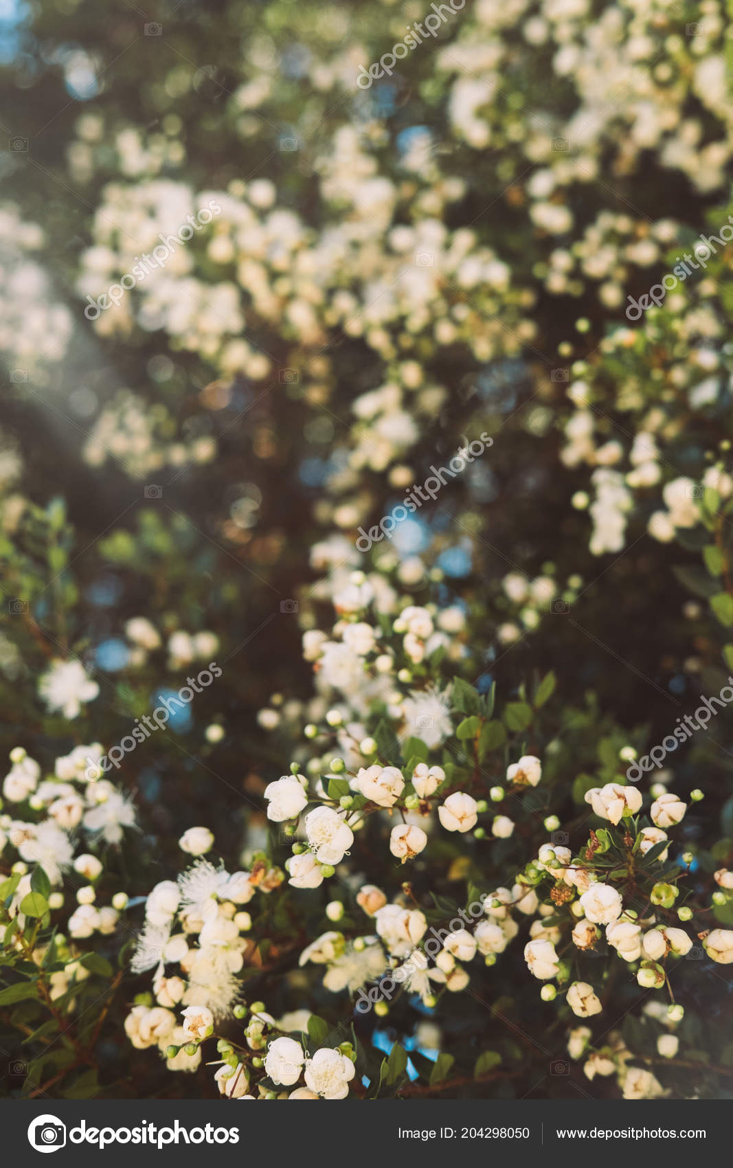 Small white flowers trees stock photo ritatim 204298050 small white flowers trees stock photo mightylinksfo