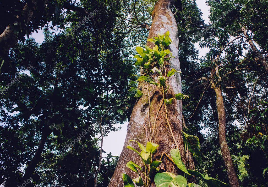Jungle nature, green plant, in Honba, Vietnam