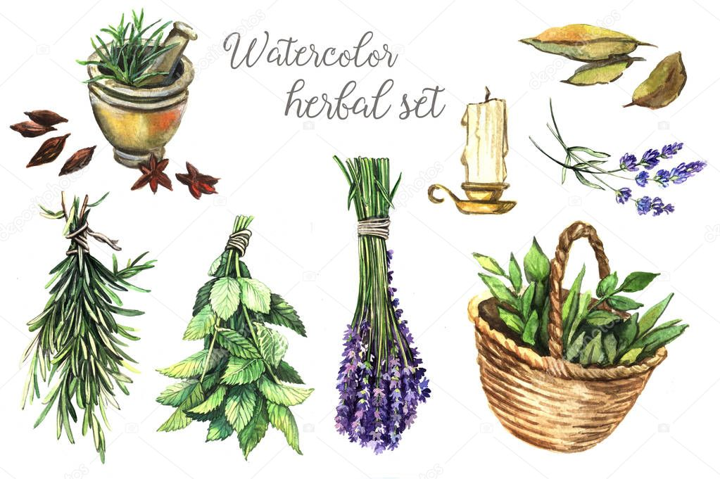 Illustration Watercolor herbal set