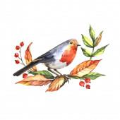 Rudý pták s listím a bobule. Pravá akvarel. Náčrt ptáka. Dekorativní prvek pro navrhování pohlednic, reklam a pozvání.