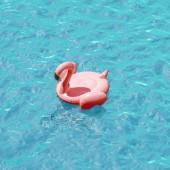 Fotografia nuoto di fenicottero rosa cerchio sullacqua