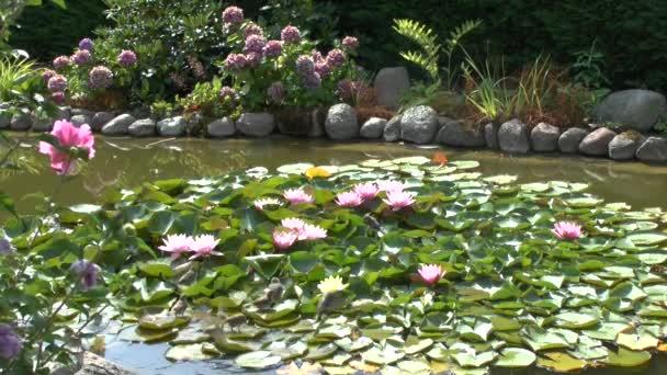 Vrabci vykoupat v rybníku na lily podložky