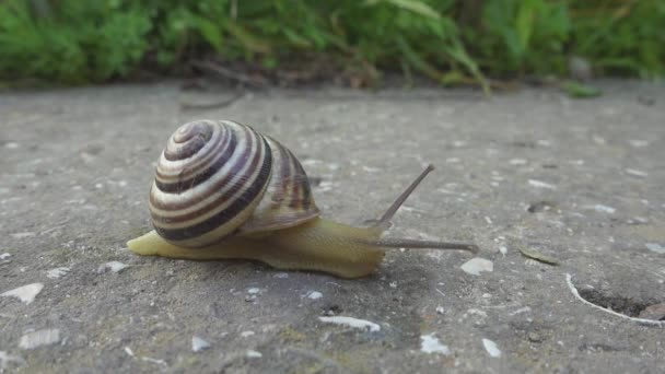 Snail crawl on stone background. Cochlea creeps on the ground. close up view