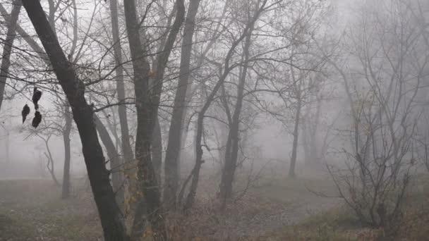 Nebelwald oder Park Herbstlandschaftspanorama