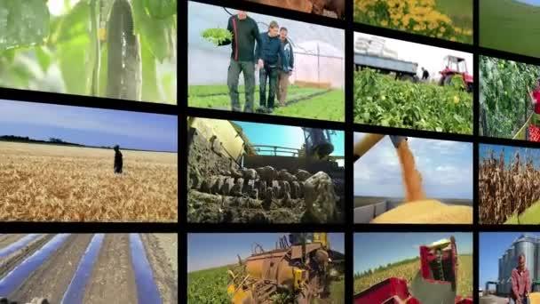 Video Wall Montage - Zemědělská výroba. Koláž videoklipů ukazujících zemědělce na různých sezónních zemědělských pracích na poli. Zemědělské a zemědělské práce. Agricultural Media Video Wall.
