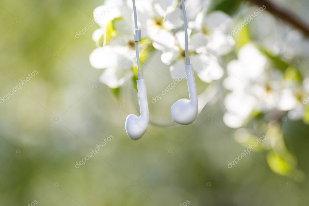 Among the flowers of the apple tree on the branch hang the headphones from the mobile phone.