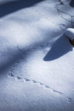 BIrd footprints on white snow