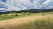 Scénický pohled na krásnou krajinu na Slovensku. Louka a les ve Slovenském ráji. Okouzlující a klidná scéna v létě