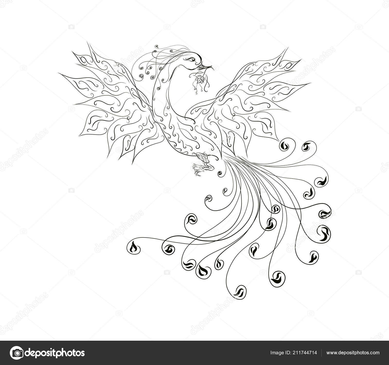 Disegni Colorare Bella Sunbird Phoenix Con Una Magnifica Coda