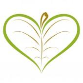 Fotografie Green leaf of heart shaped tree pattern