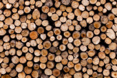Sawed tree trunks and branches in different sizes, piled up in blue container Wood storage industry. Background of dry chopped firewood logs stacked up on top of each other in a pile