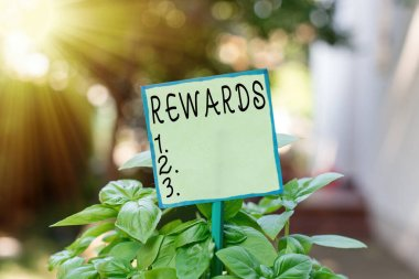 Conceptual hand writing showing Rewards. Business photo text certain number or percentage you earn for every dollar you charge Plain paper attached to stick and placed in the grassy land.