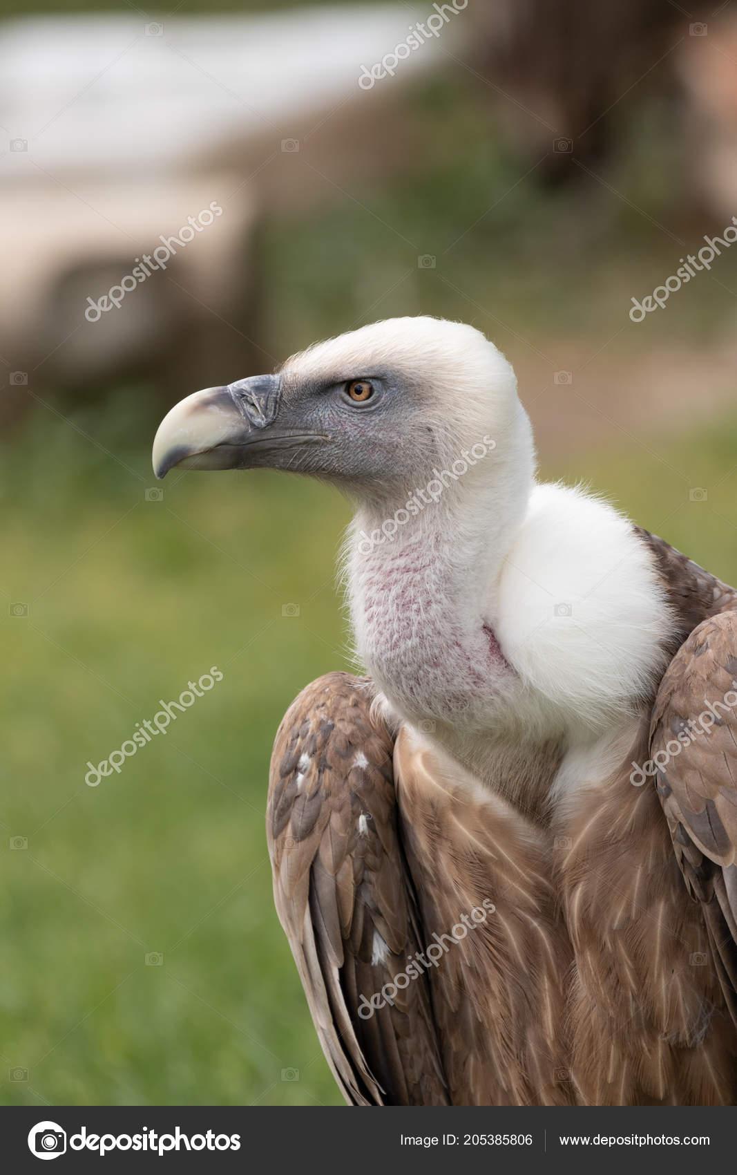 μεγάλο πουλί άνθρωπος σεξ