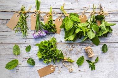 Fresh herbs prepared for drying. stock vector