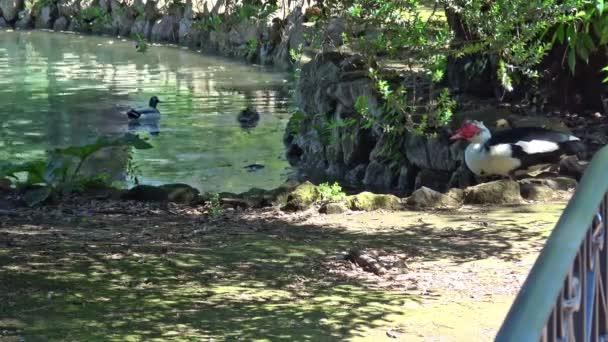 Rom, Villa Borghese See mit Enten und Schildkröten