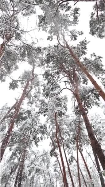 hó, szép hó esik a földre, a hó, a téli erdő a fák
