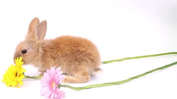 Coniglietto di Pasqua, coniglietti carini, coniglio su sfondo bianco