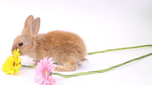 Velikonoční zajíci, roztomilí králíci, králík na bílém pozadí