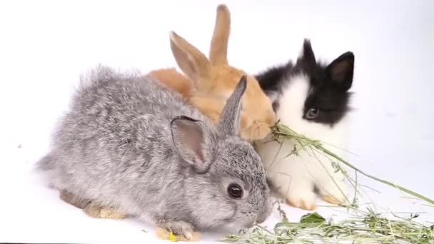 Funny hamster, hamster eats, hamster on a white background