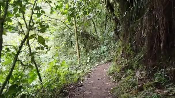 pahuma orchideenreservat, etwa eine stunde nordwestlich von quito, ecuador.