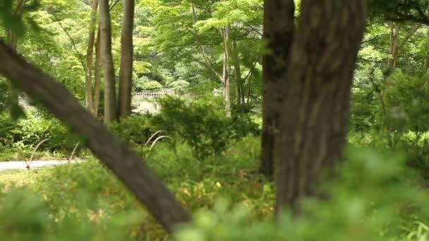 Tachikawa, Tokio/Japonsko - 16th červen 2017: Její přírodní lokalita v Tokiu. fotoaparát: Canon Eos 7d