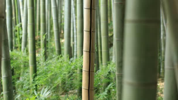 Higashikurume, Tokio/Japonsko - 11th červenec 2018: Své tradiční místo v Tokiu. fotoaparát: Canon Eos 5d mark4
