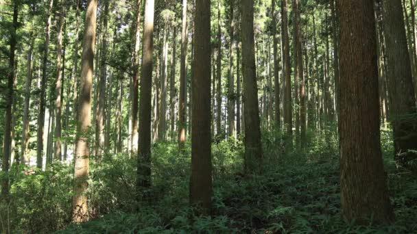 Itadori, Gifu/japán - augusztus 7 2018: A természet helyen, Gifu, Japán. fényképezőgép: Canon Eos 5d mark4