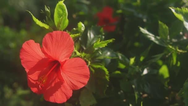 Amami, Kagoshima/japán - szeptember 22 2018: Az egy helyen természet, Amami sziget Kagoshima. idő telik el. fényképezőgép: Canon Eos 5d mark4