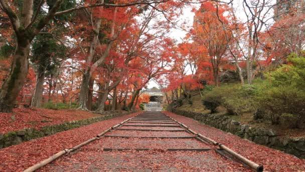 Červené listy na podzim v Bishamondou v okrese Yamashiny v Kjótu öirok˝ záběr
