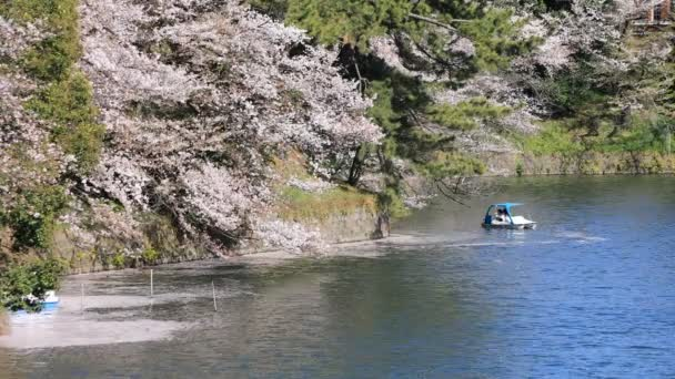 Cherry blossom at Chidorigafuchi in Tokyo wide shot