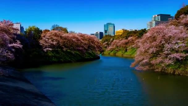A Chidorigafuchi-tó időzónája cseresznyefákkal Tokióban tavasszal