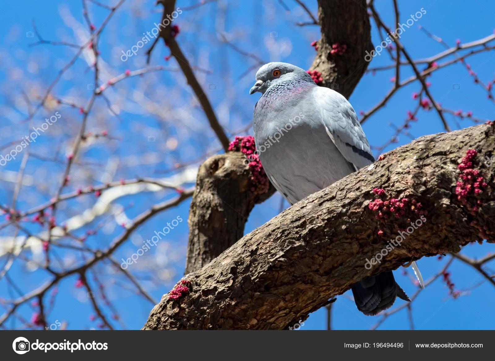 μεγάλο και λίπος πουλί