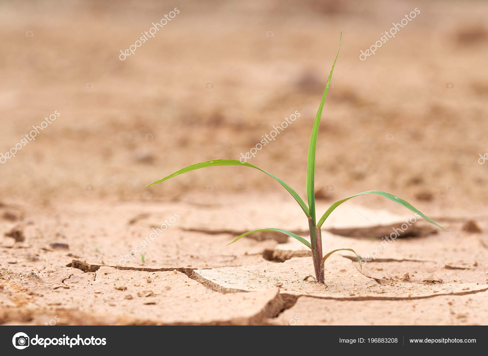 Die Pflanzen Wachsen Auf Trockenem Boden Pflanzen Versuchen Das