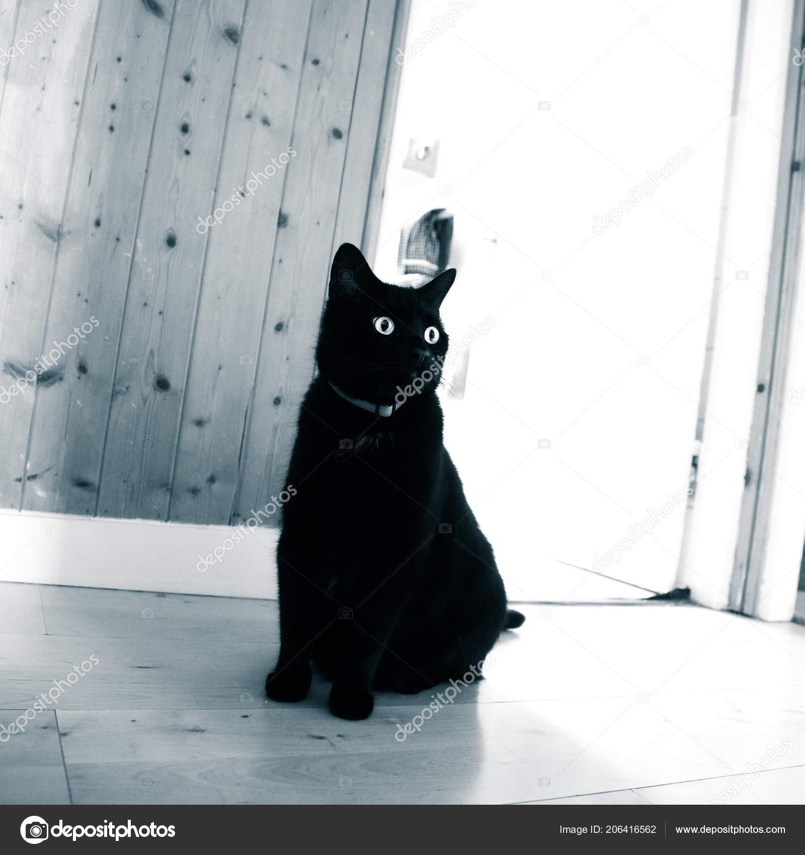 Barva tělová, černá kočka. Další tajná kapsa, vhodná k uložení dokladů nebo klíčů, je všita uvnitř tašky.