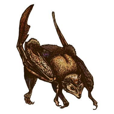 Seated bat with folded wings. Pteropodidae. flying fox