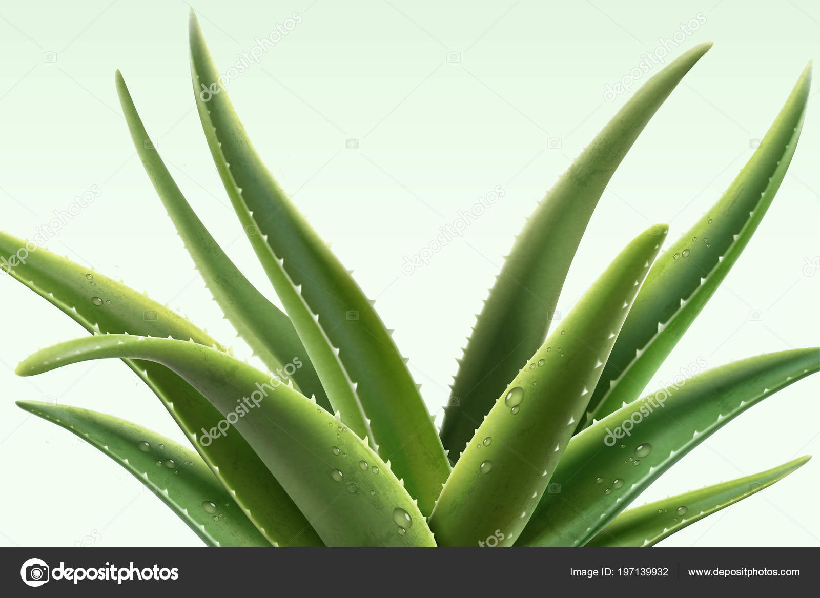 Planta aloe vera con roc o ilustraci n vector de stock mitstudio 197139932 - Planta de aloe vera precio ...