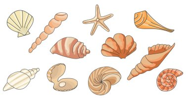 pattern with seashells, vector illustration.Summer concept with seashells and starfish.