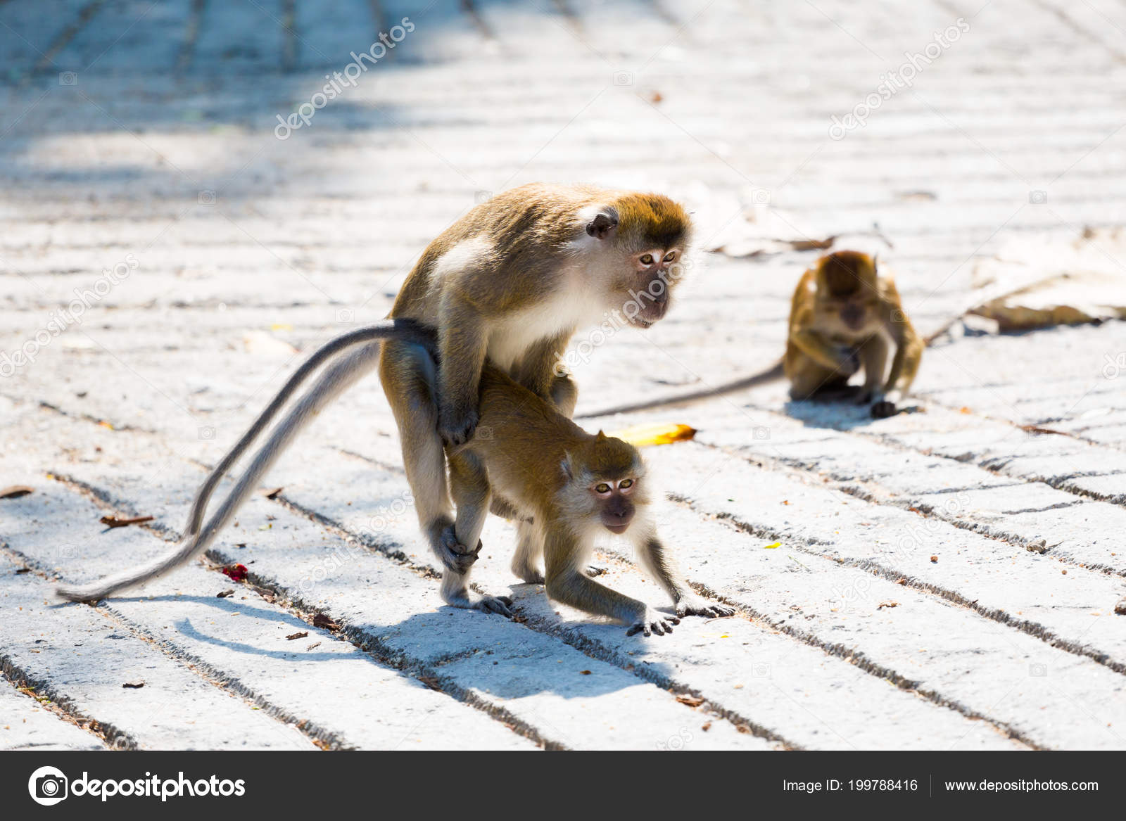 Picture of monkey having sex have quickly