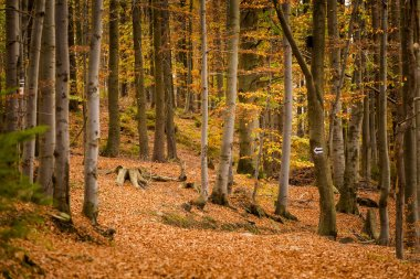 Autumn landscape photo taken in polish Beskidy mountains, Grabowa.